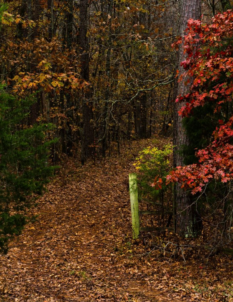 Lori Harrell Into the Woods
