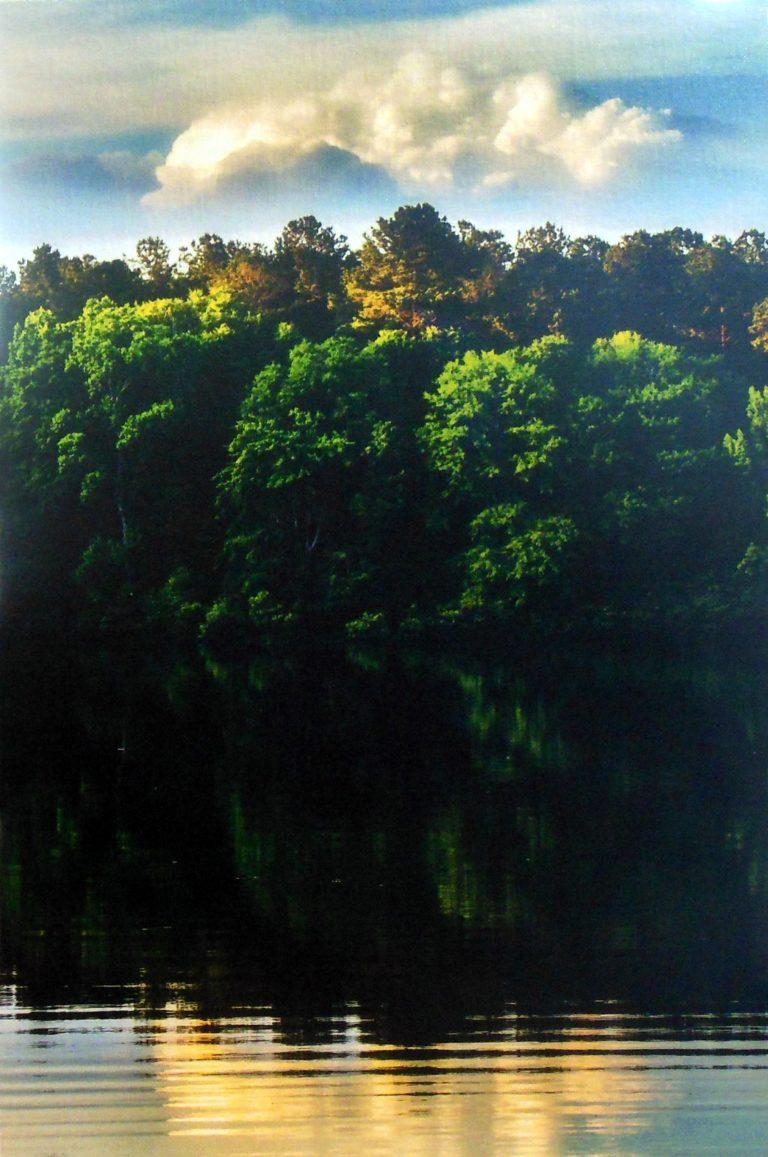 Lori Harrell Majestic Trees