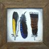 Three Feathers I