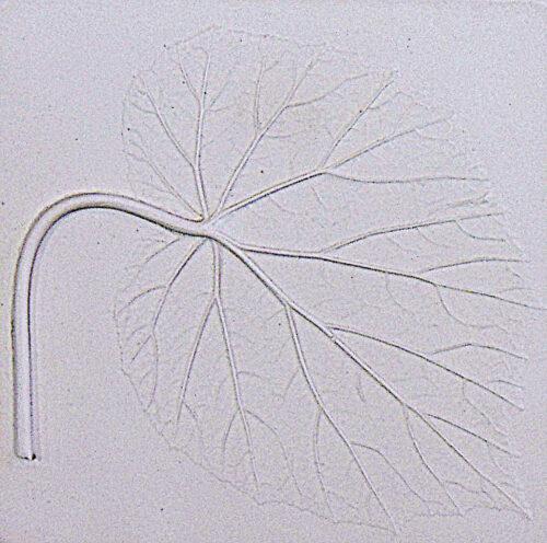 Begonia (white)