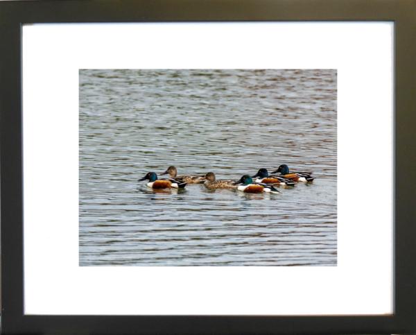 Afternoon Swim by Lori Harrell framed