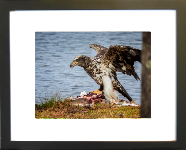 Dinner is Served by Lori Harrell framed