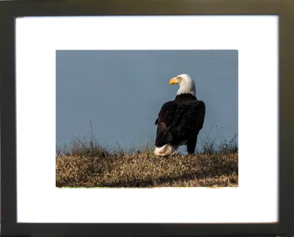 Excalibur by Lor Harrell framed