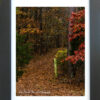 Into the Woods by Lori Harrell framed