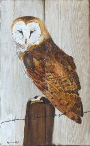 Keith Moore -Barn Owl