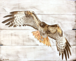 Red Tail Hawk in Flight by Keith Moore