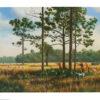 Quail Creek Plantation by Bucky Bowles