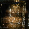 That Place Between Sleep and Awake by Lori Harrell