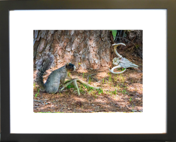 This is Mine by Lori Harrell framed